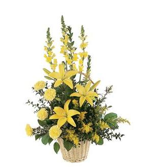 Ray of Hope Arrangement (TF187-3)