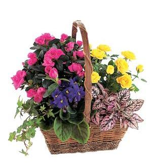 Blooming Garden Basket