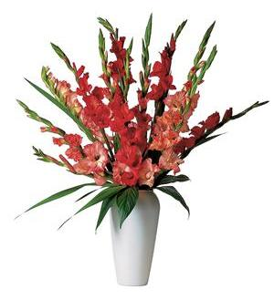 Glorious Gladioli! (TF21-1)
