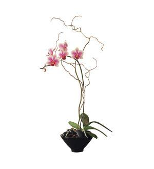 Miniature Lavender Orchid in a Small Bowl (TF219-7)