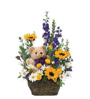 New Baby Basket & Bear (TF47-5)