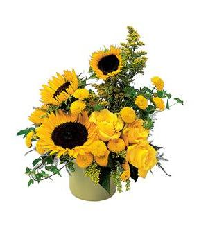 A Pot of Sunflowers (TF67-2)