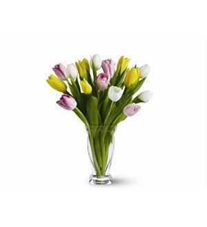 15 Mixed Tulips (TFWEB406)