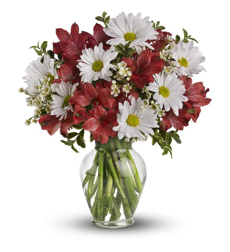 Teleflora Dancing in Daisies - Deluxe Flower Arangement