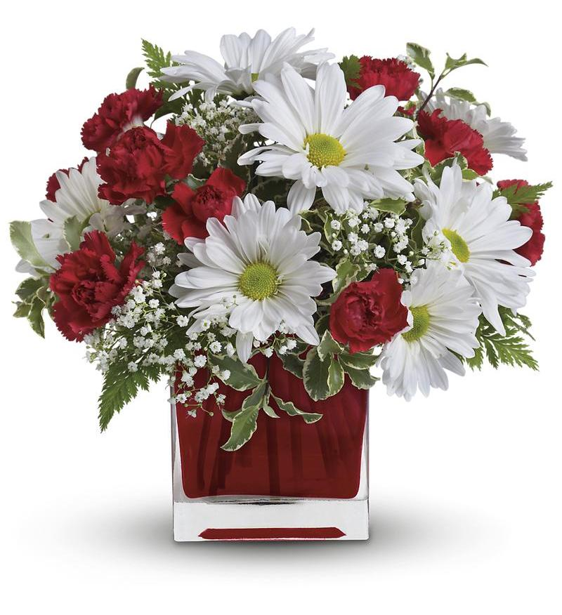 Red And White Delight By Teleflora Tev27 2a 32 36