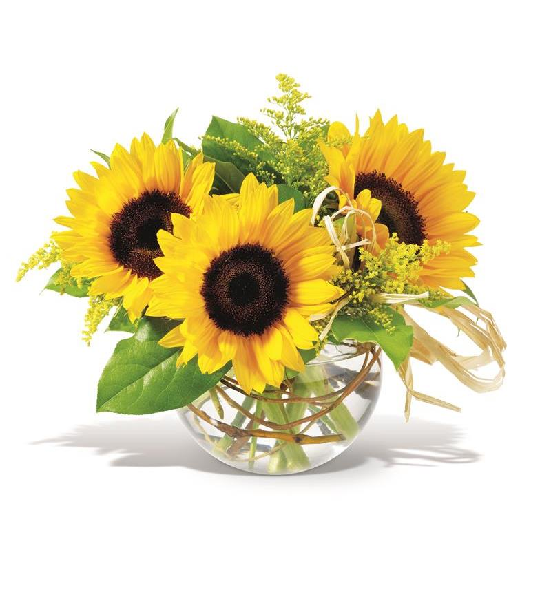 Teleflora S Sassy Sunflowers Tf F11 46 76