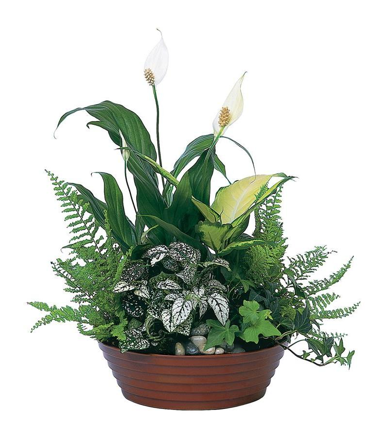 White garden tf139 2 for Garden arrangement of plants