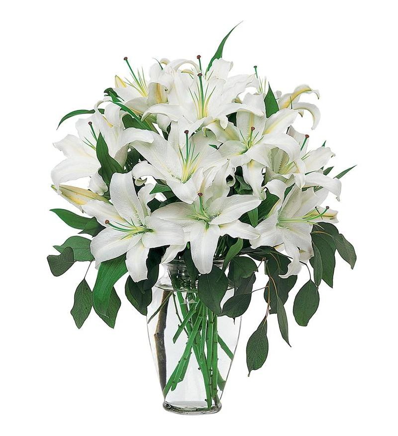 Teleflora Perfect White Lilies Flower Arangement - As Shown