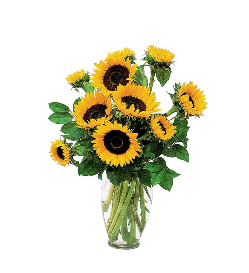 Teleflora Shining Sunflowers Flower Arangement - As Shown